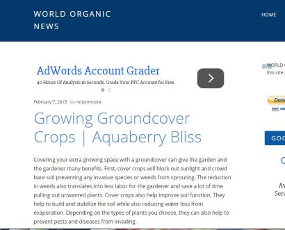 AB groundcover